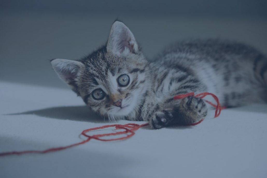 image to support red thread in cats cradle